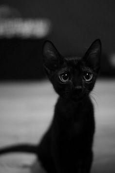 Big eyes on a tiny black kitten