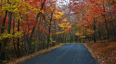 Winding country road near Catoctin Mountain Park. Photo by Kai Hagen Photography. Makes my heart ache for home.