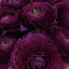 White Wedding Flowers, Flower Bouquet Wedding, Color Borgoña, Blush Peonies, Blush Pink, Ranunculus Flowers, Silk Roses, Lavender Roses, Artificial Silk Flowers
