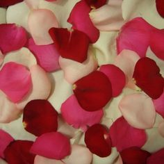 """Instead of Roses, try Rose Petals, for a fun and flirtatious Valentine's. Use the petals to spell """"XOXO"""" across your bed, sprinkle them in a specially prepared bath or arrange them into arrows directing your loved one to a special treat... - FiftyFlowers.com - Rose Petals Love Pack"""