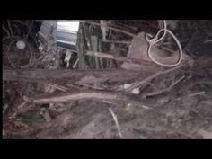 Tin tiếng Việt Bước ra sau vườn mẹ chồng tá hỏa phát hiện con dâu treo cổ