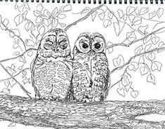 Arizona Endangered Species Coloring Pages 8 Printables Art