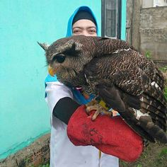 Have you ever seen a bigger owl? Owl Photos, Owl Pictures, Beautiful Owl, Animals Beautiful, Animals And Pets, Cute Animals, Animal Spirit Guides, Horned Owl, Owl Bird