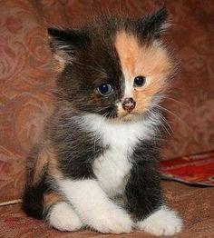 noir chatte Poppin Big Phat huilée cul