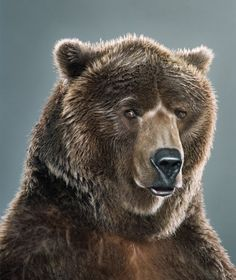 Portraits of bears by Jill Greenberg