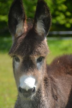 Cute Donkey, Cute Animal Photos, Cute Funny Animals, Simple Pleasures, Burritos, Ponies, Farm Animals, Animals Beautiful, Insects
