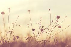 Free Image on Pixabay - Bloom, Blossom, Flora, Flowers White Dandelion, Dandelion Flower, Flora Flowers, Flowers Nature, Wild Flowers, Oscar Wilde, Flower Images, Flower Photos, Organic Gardening