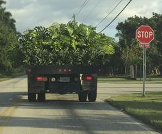 A truck filled with plants going to market.