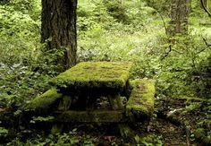 Forgotten table, abandoned, nature, moss