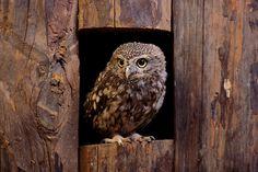 http://www.nature-pictures.org/foto_DO_prezentacji/1508_ca06f110f9982c5493f100fa90b4d7af_3.jpg