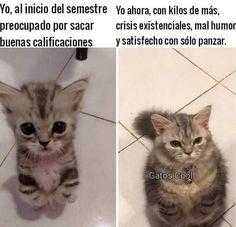 "@gatoscooloficial publicó en su perfil de Instagram: "". . . #memesdegatoscool #gatoscool😸 #gatos_cool #cuarentena #semestre #clasesencasa #clases…"""