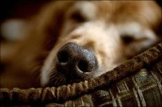 One Summer, Dogs, Animals, Animales, Animaux, Pet Dogs, Doggies, Animal, Animais