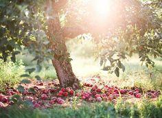 Apple tree ♡
