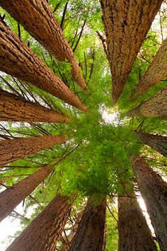 Redwoods national park in california is a beautiful place to see the largest trees in the world!! Worldventures can take you there!!!!