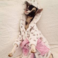 Little goat is enjoying some time off http://ift.tt/2dkWYEs