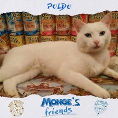 Poldo #Mongesfriends
