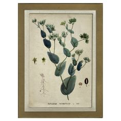 Showcasing a scientific botanical motif, this framed giclee print makes a charming addition to your study or den.  Product: Fram...