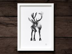 Add a drop of freshness to you wall with a black and white fine art print of this much loved cold-water fish. Reindeer, Scandinavian, Fine Art Prints, Moose Art, Posters, Wall Art, Black And White, Illustration, Animals