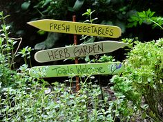 Herb Garden Sign: Toads Welcome  I would make this with large pieces of wood so it stands up tall in garden