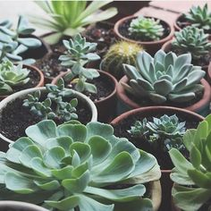 A bunch of green friends  #leafandclay #succulents cc: @needlesandleaves by leafandclay
