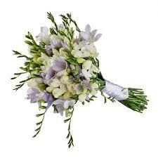 Resultado de imagen para fresias flores