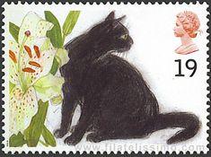 Sophie. Gato Europeo negro.