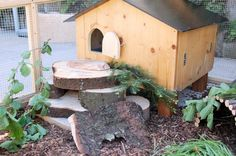 How wonderful is this outdoor guinea pig cage
