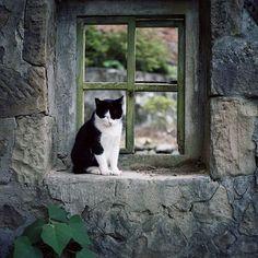 cat on a window ledge