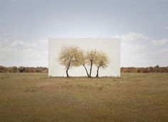 Myoung Ho Lee (South Korea, born 1975), Tree…#4, 2013, From the series Trees Abroad, Inkjet Print, 104.1 × 134 cm