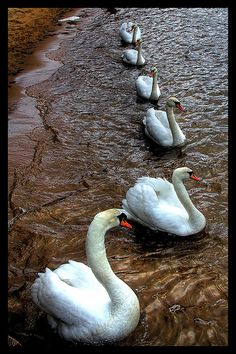 ~~Swan City~~