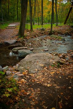 Stream Crossing at Parfrey's Glen | Flickr - Photo Sharing!   http://www.devilslakewisconsin.com