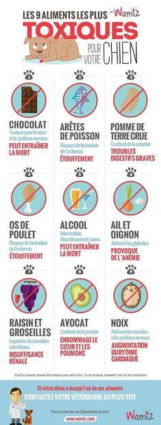 Les 9 aliments les plus toxiques pour votre chien: