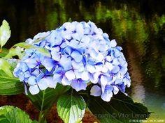 Flores do Meu Jardim.. (Em tons de Azul.. )