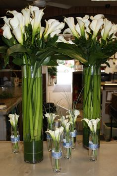 Giant Calla lilies and their smaller counterparts.