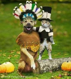 Funny+Dog+Halloween+Costumes | 17 Funny and Fancy Dog's Costumes | Funky Downtown