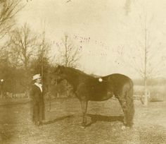 """Almanzo, bred Morgans and after they moved to Mansfield, MO, in the late 1800's, purchased a Morgan stallion named """"Governor of Orleans"""" not only to breed Morgan horses himself but to improve the local horses in the Ozarks.  Here's a picture of Laura Ingalls Wilder with the stallion,"""