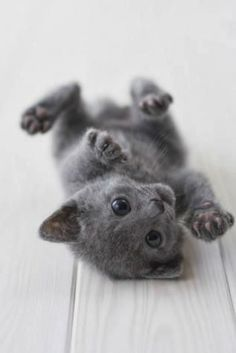 6 Adorable kittens every cat lover must see The Pet's Planet
