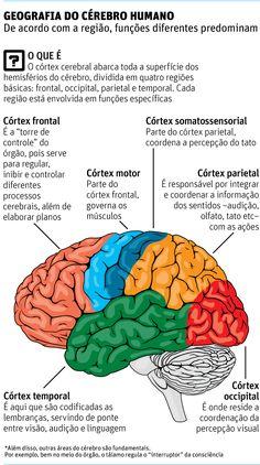 Neurocientista mostra em livro por que cérebro ainda é uma incógnita - diseños de interiores - Medicine Notes, Medicine Student, Brain Anatomy, Medical Anatomy, Mental Map, Brain Based Learning, Study Organization, Study Notes, Psychiatry