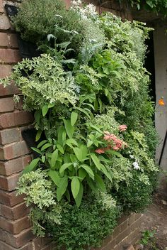 Edible Living Wall by Garden Up!, via Flickr