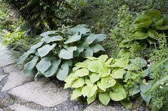 F.Boucourt - Rustica - Jardin d'Agapanthe