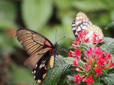 Butterfly by Grant Shepherd on 500px