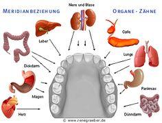 Beziehung Zähne - Meridiane und mögliche Zahnstörfelder