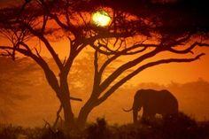 Sun Animals Elephants Trees Wildlife Wallpaper