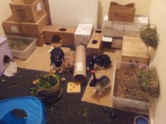 Indoor bunny room with lots of enrichment! #ahutchisnotenough Rabbit Cages, Rabbit Toys, Pet Rabbit, Rabbit Playpen, Bunny Cages, Rabbit Hutch Indoor, Rabbit Enclosure, Bunny Room, Bunny Hutch