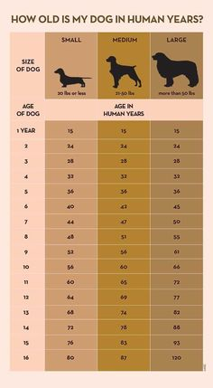 Your Dog's Age In Human Years: A Conversion Chart Your Dog's Age In Human Years: A Conversion Chart Dog years calculator infographic Dog Care Tips, Pet Care, Puppy Care, Pet Tips, Chien Jack Russel, Dog Information, Info Dog, Dog Ages, Dog Training Tips