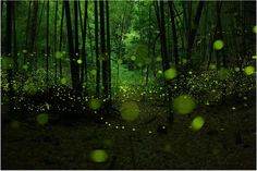 Magical, Fairy-Like Photographs Of Fireflies