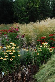 Echinacea, ornamental grasses, chocolate heuchera