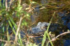 Everglades National Park – One of America's Great Natural Wonders