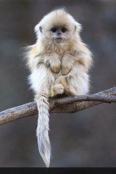 #monkey #little #cute #small #hairy #animal
