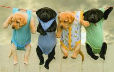 Puppies, in baby clothes, HANGING on a clothes line. Is this the ultimate combo of cute?!